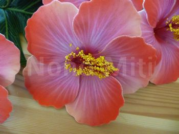 Pic ou pince hibiscus * tendance orange